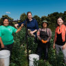 Green Connect Farm in Lake Heights, south of Wollongong has helped refugees and other gain employment. Standing left to right: Su Meh, Emily Henderson, Pleh Meh and Kylie Flament, general manager of Green Connect.