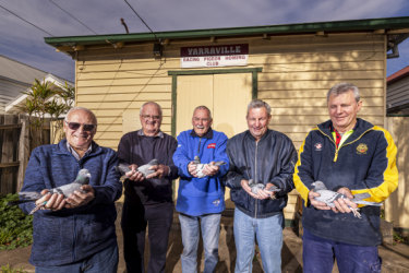 Goodbye clubhouse: Some of the eight remaining Yarraville Racing Pigeon Club members (left to right) Bernie Osmond, Les Staehr, Laurie Moore, Allan Saggers and John Saggers.