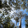 Native forest logging in WA faces the chop with 2024 ban