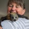 'It's extremely cruel': backyard netting killing, maiming fruit bats
