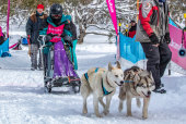 Mush! Mush! Sam Hughes, 14, travelled from New Zealand to compete in the 2019 Dinner Plain Sled Dog Challenge on the weekend.