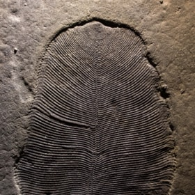 This defenceless blob is 540 million years old