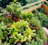 Everything in the (rental) garden's lovely
