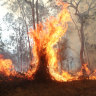 No decent rain until 2020 in bushfire-ravaged Queensland