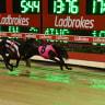 'I won't quit my job': Harness racing trainer eyes greyhound purse