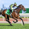 Favourites draw widest stalls for Caulfield Cup as Duais stakes claim