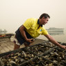 'Shell-shocked' Pacific oyster industry set to rebound in record time