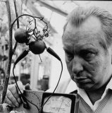 L. Ron Hubbard, founder of Scientology, using an e-meter to determine whether tomatoes suffer pain.