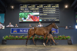 Tony Fung and Phoenix are cornering the market on Not A Single Doubt colts at Magic Millions with the son of One More Honey bring $1.8 million on Thursday.