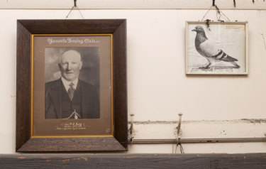 Yarraville Racing Pigeon Club's hall is filled with photos of distinguished past members and star racing pigeons.