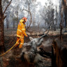 An East Maitland firefighter mops up a fire near Purfleet, Taree on November 10.