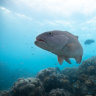 Small fish have big impact on marine populations, research finds