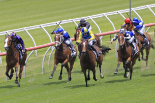Salina Dreaming (yellow and blue colours) wins at Randwick for Angela Davies.