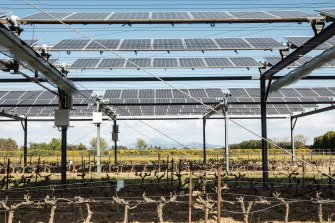 The French Chamber of Agriculture is conducting an experiment with solar panels to limit the effects of global warming on wine producing in Piolenc.