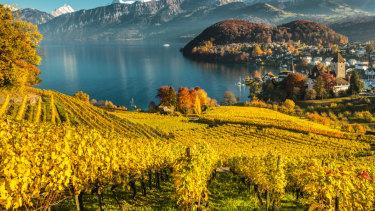 View from a vineyard down to Spiez, Switzerland.