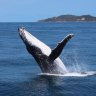 Safety notice for Gold Coast whale-watching vessel after accident