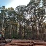 Multiple problems with state logging agency, damning audit reveals