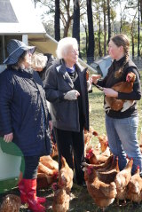 Mrs Cotterell takes a tour group to CharCol Springs pastured egg farm, Yanmah, WA.