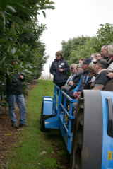 Mrs Cotterell takes a tour group to Fontanini Fruit and Nut Farm's avocado orchard in Manjimup.
