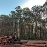 The fight over Australian logging goes global