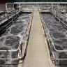 Virus fragments found at seven more Queensland wastewater treatment plants