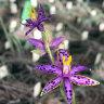 Orchid fever as 10-year quest finally unlocks Queen of Sheba's secret