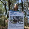 'Koala plan needs to go back to the drawing board': Redlands mayor
