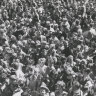 From the Archives, 1954: Melbourne crowd in hysterical crush to see Hopalong Cassidy