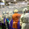 With the food chain breaking down, US is on cusp of meat shortage