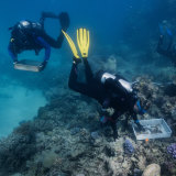 Work is underway to plant 100,000 healthy corals on reefs in the Cairns and Port Douglas region.