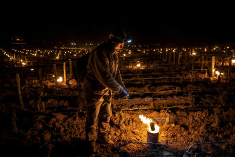 Winemakers in various regions of France lit candles between vines to warm them up in an effort to protect their crops from unusual late-night frosts this year.