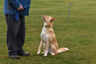 Barney Zwartz and his dog, Nessie, a border collie-labrador cross.