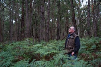 """""""Plain madness"""": Kevin Heggen says logging in the Alberton forest is illogical."""