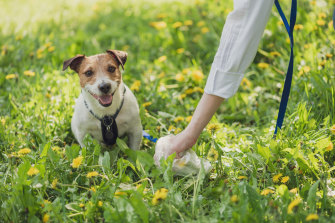 Dog poo is packed with harmful bacteria and nutrients that inhibit plant growth, pollute waterways and cause diseases in humans.