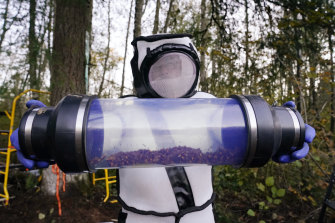 Sven Spichiger, Washington State Department of Agriculture managing entomologist, displays a canister of Asian giant hornets vacuumed from a nest in a tree, in Blaine, Washington.