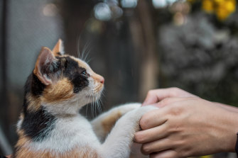 Many owners are too worn down by a sense of loss to contemplate getting another pet after theirs dies.