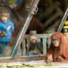 Animals' long wait over as (small) crowds return to zoos, aquarium