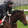 Caulfield Cup barrier draw: Mr Quickie in fast lane