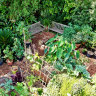 Healthy growth of the edible gardening movement