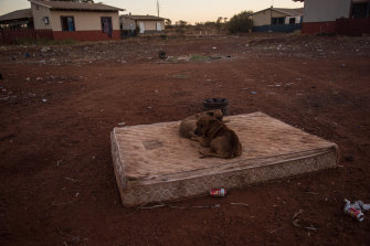 Stray bush dogs sit on a dusty mattress in Parnpajinya, a reserve on the outskirts of Newman. Despite a big sign banning the consumption of alcohol in the community, cans and shattered bottles litter the streets.