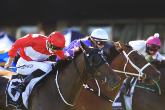 Sacramento (left) got the chocolates over New Arrangement earlier this month but the pair are set to do battle again in the sixth at Randwick on Saturday.