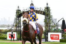 Craig Williams comes to Tamworth on Friday to ride Total Recall in the cup.
