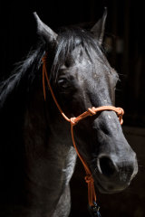 Justice stands in a barn at what may be a temporary home in Estacada, Oregon.