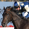 Cox Plate winner Sir Dragonet euthanised after 'catastrophic' injury