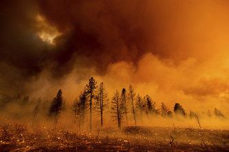 Smoke envelops trees during a bushfire in Doyle, California.