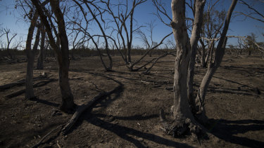 Four out of five Australians say corporate leaders are entitled to speak up on social and environmental issues such as drought.