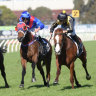 Portelli and Clenton look for change of luck with Roman Wolf