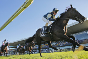Sir Dragonet will come up against Incentivise on Saturday.