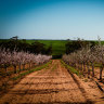 Canadian pension fund loads up on Australian water rights and almond farms