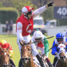 Confident O'Shea targets lion's share of spring riches
